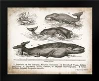 Antique Whales II: Framed Art Print by Babbitt, Gwendolyn