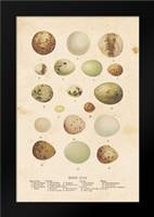 Birds Eggs II: Framed Art Print by Babbitt, Gwendolyn