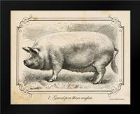 Farm Pig II: Framed Art Print by Babbitt, Gwendolyn