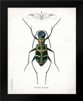Beetle I: Framed Art Print by Babbitt, Gwendolyn