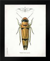 Beetle II: Framed Art Print by Babbitt, Gwendolyn