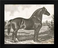Horse Etching I: Framed Art Print by Babbitt, Gwendolyn