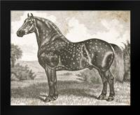 Horse Etching II: Framed Art Print by Babbitt, Gwendolyn