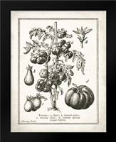 French Tomatoes: Framed Art Print by Babbitt, Gwendolyn