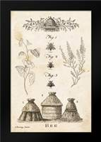 Bee Chart II: Framed Art Print by Babbitt, Gwendolyn