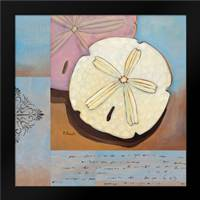 Sanibel Sand Dollar: Framed Art Print by Brent, Paul