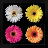 Gerbera Group I: Framed Art Print by Christensen, Jim