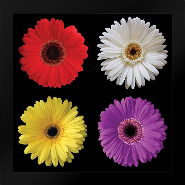Gerbera Group II: Framed Art Print by Christensen, Jim