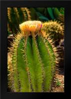 Cactus Flowers I: Framed Art Print by Johnson, George