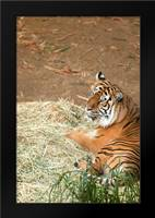 Tiger I: Framed Art Print by Millet, Karyn