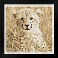Young Africa Cheetah: Framed Art Print by Parker, Susann