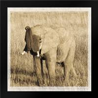 Young Africa Elephant: Framed Art Print by Parker, Susann
