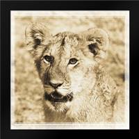 Young Africa Lion: Framed Art Print by Parker, Susann