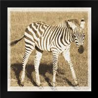 Young Africa Zebra: Framed Art Print by Parker, Susann