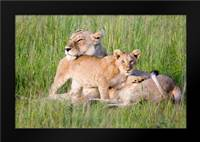 Pride of a Lioness: Framed Art Print by Parker, Susann