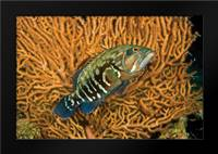 Fish I: Framed Art Print by Peterson, Lee