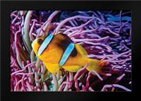 Fish II: Framed Art Print by Peterson, Lee