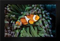Fish III: Framed Art Print by Peterson, Lee