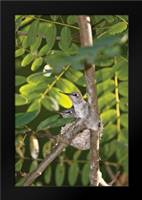 Hummingbird I: Framed Art Print by Peterson, Lee