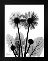 Gerbera BW: Framed Art Print by Koetsier, Albert