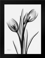 Tulips H37: Framed Art Print by Koetsier, Albert