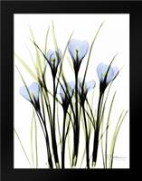Crocus C38: Framed Art Print by Koetsier, Albert