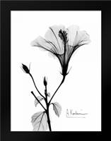 Hibiscus: Framed Art Print by Koetsier, Albert