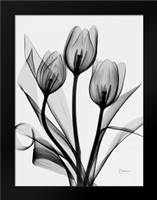 Tulips: Framed Art Print by Koetsier, Albert