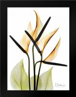 Anthurium: Framed Art Print by Koetsier, Albert