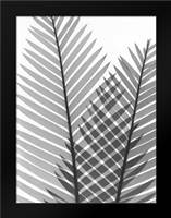 Tropical Fern 1: Framed Art Print by Koetsier, Albert