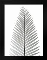 Tropical Fern 2: Framed Art Print by Koetsier, Albert