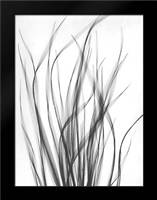 Grass 2: Framed Art Print by Koetsier, Albert