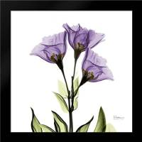 Gentian Purple L301: Framed Art Print by Koetsier, Albert