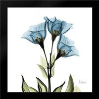 Gentian Azure L301: Framed Art Print by Koetsier, Albert