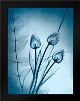 Cerulean Dawn: Framed Art Print by Koetsier, Albert