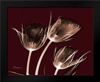 Crimson Tulips: Framed Art Print by Koetsier, Albert