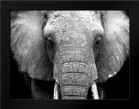 Elephant Lore: Framed Art Print by Alvarez, Cynthia