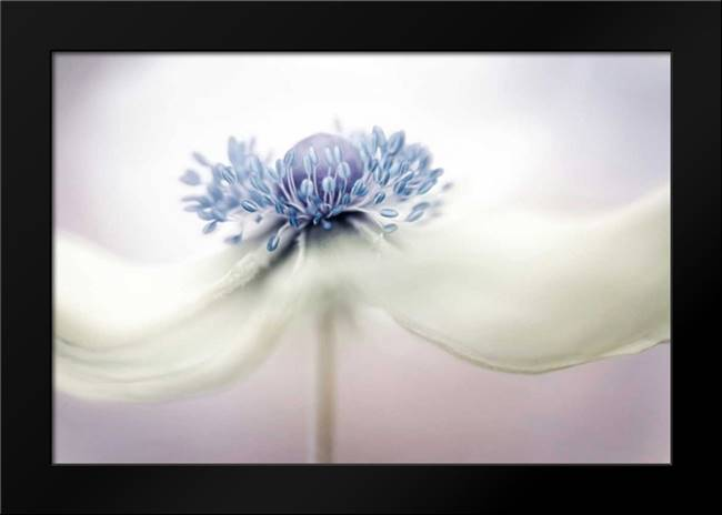 Disher - Anemone: Framed Art Print by 1x