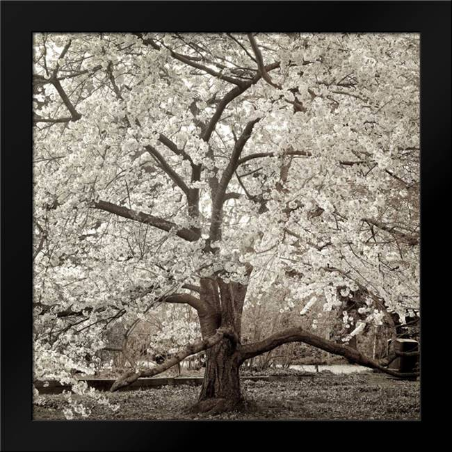 Hampton Magnolia - 2: Framed Art Print by Blaustein, Alan