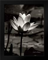 Lotus Flower VII: Framed Art Print by Van Swearingen, Debra