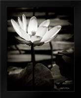 Lotus Flower VIII: Framed Art Print by Van Swearingen, Debra