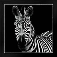 Zebra II Square: Framed Art Print by Van Swearingen, Debra