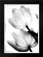 Translucent Tulips II: Framed Art Print by Van Swearingen, Debra