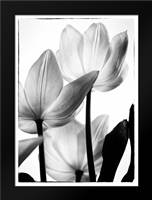 Translucent Tulips III: Framed Art Print by Van Swearingen, Debra