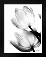Translucent Tulips II no border: Framed Art Print by Van Swearingen, Debra