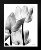 Translucent Tulips III no border: Framed Art Print by Van Swearingen, Debra