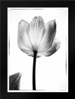 Translucent Tulips I: Framed Art Print by Van Swearingen, Debra