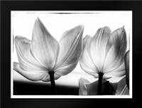 Translucent Tulips V: Framed Art Print by Van Swearingen, Debra
