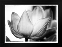 Translucent Tulips VI: Framed Art Print by Van Swearingen, Debra