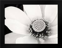 Lotus Flower IV: Framed Art Print by Van Swearingen, Debra